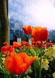 Frühling in der Stadt Stockbild
