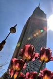Frühling in der Stadt Stockfoto