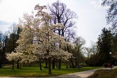 Frühling in der Stadt Bratislava Stockfotografie