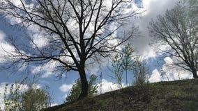 Frühling Der Wind wird durch die jungen Bäume geworfen, die auf dem Abhang wachsen Ein großer Baum wächst ohne Blätter mit einer  stock video footage