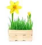 Frühling in einem Korb Stockbild