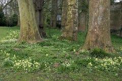Frühling in einem Park lizenzfreies stockbild