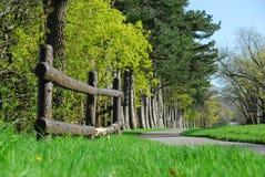 Frühling in einem Park Lizenzfreie Stockbilder