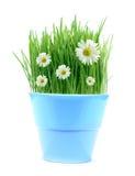 Frühling in einem Potenziometer Lizenzfreies Stockbild