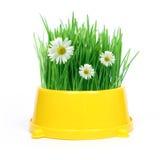 Frühling in einer Schüssel Stockbilder