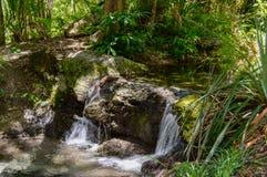 Frühling eingezogener Wasserfall Lizenzfreie Stockbilder