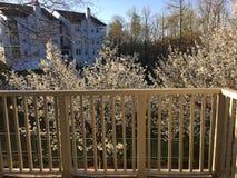 Frühling entsprungen Stockbild