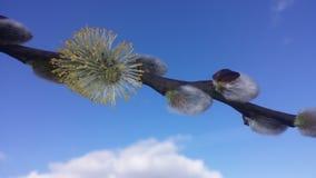 Frühling entsprungen Stockfotografie
