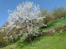 Frühling in Europa Lizenzfreies Stockbild