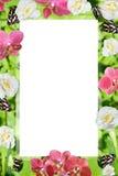 Frühling färbt Rahmen von Orchideen und von narcissuses Lizenzfreie Stockfotos