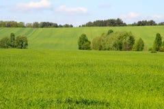 Frühling, Feld, Horizont Lizenzfreies Stockbild