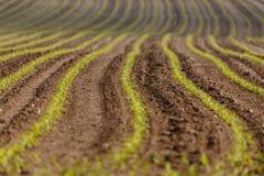 Frühling gepflogene Feldkurven Lizenzfreies Stockfoto