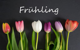 Frühling - the german word for spring. Spring background with some tulips Stock Photos