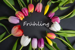 Frühling - the german word for spring. Spring background with some tulips Royalty Free Stock Photo