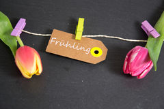 Frühling - the german word for spring. Spring background with some tulips Stock Images