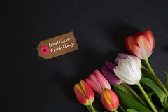 Frühling - the german word for spring. Spring background with some tulips Royalty Free Stock Images