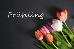 Frühling - the german word for spring. Spring background with some tulips Stock Photography