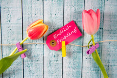 Frühling - the german word for spring. Spring background with some tulips Royalty Free Stock Photography
