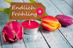 Frühling - the german word for spring. Spring background with some tulips Stock Image