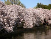 Frühling am Gezeiten- Bassin Stockbild