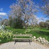 Frühling, heller blauer Himmel, Mandelbäume im Februar in Europa, por Stockbilder