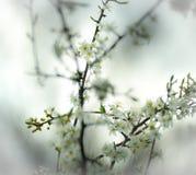 Frühling holt das neue Leben und blüht auf Niederlassungen stockfotografie