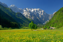 Frühling im alpinen Tal Stockfotografie