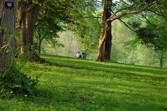 Frühling im Arboretum Stockfoto