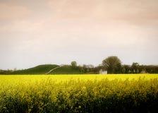 Frühling im Bayern: schönes gelbes Canolafeld Stockfoto