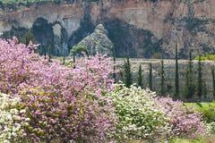 Frühling im Berggebiet stockbilder