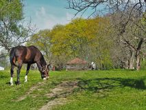 Frühling im Dorf Lizenzfreie Stockfotos