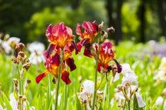 Frühling im Garten blenden Lizenzfreie Stockfotografie