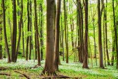 Frühling im Holz Stockfotografie