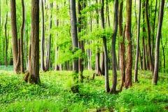 Frühling im Holz Stockbilder
