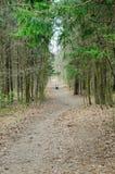 Frühling im Holz lizenzfreie stockfotos