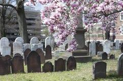 Frühling im Kirchhof Lizenzfreie Stockbilder