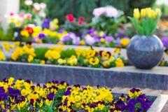 Frühling im Kirchhof Stockfoto