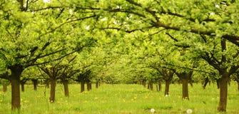 Frühling im Obstgarten Stockbilder