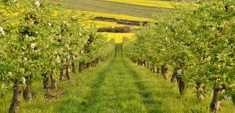 Frühling im Obstgarten Lizenzfreie Stockfotos
