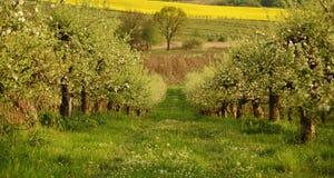Frühling im Obstgarten Stockbild