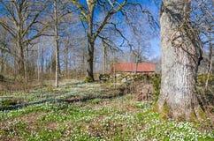 Frühling im schwedischen Park Lizenzfreies Stockbild