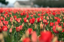 Frühling im Skagit Tal Lizenzfreie Stockfotografie