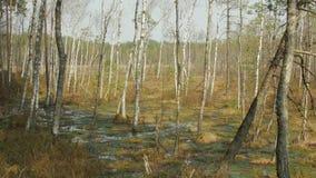 Frühling im Sumpf stock video