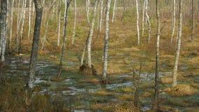 Frühling im Sumpf stock footage