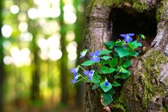 Frühling im Wald Lizenzfreies Stockbild