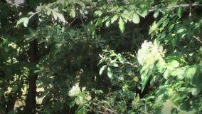 Frühling im Wald stock video footage