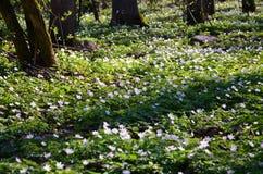 Frühling im Wald lizenzfreie stockfotografie