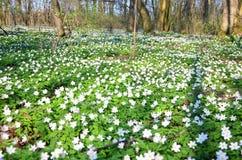 Frühling im Wald stockfotografie