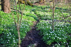 Frühling im Wald lizenzfreie stockfotos
