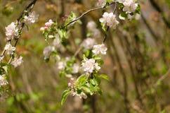 Frühling im Wald Stockfoto